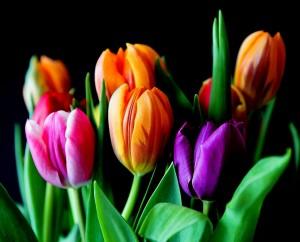 flowers-429041_1280