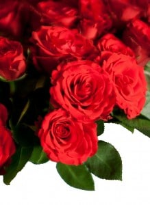 roses-97109_1280