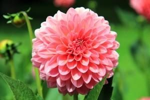 flower-197343_1280