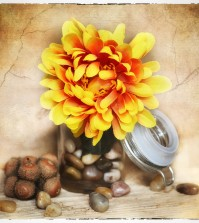 flower-686399_1280