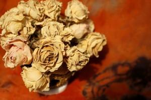 flowers-13789_640