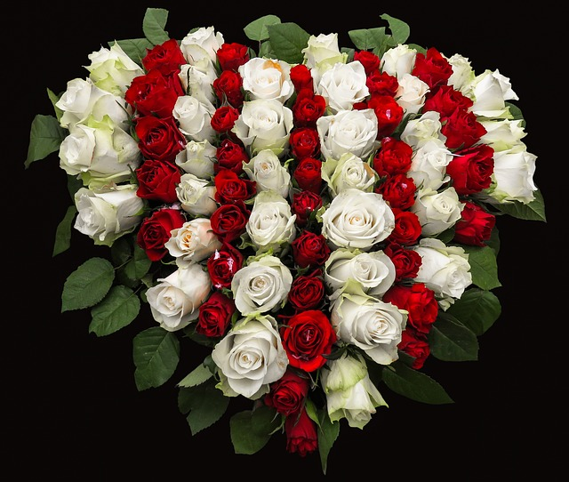 roses-1040758_640