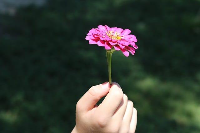 flower-574653_640