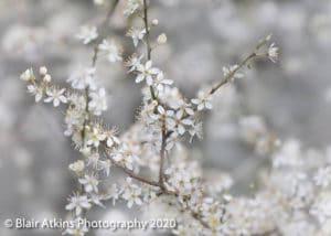 Blair Atkins Photography