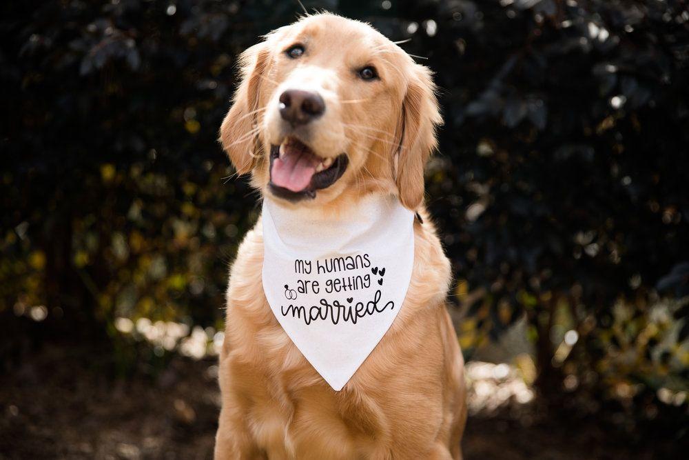 Dog Costumes for Your Wedding-Bandana Costume