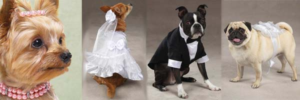 Wedding Clothes for Pets